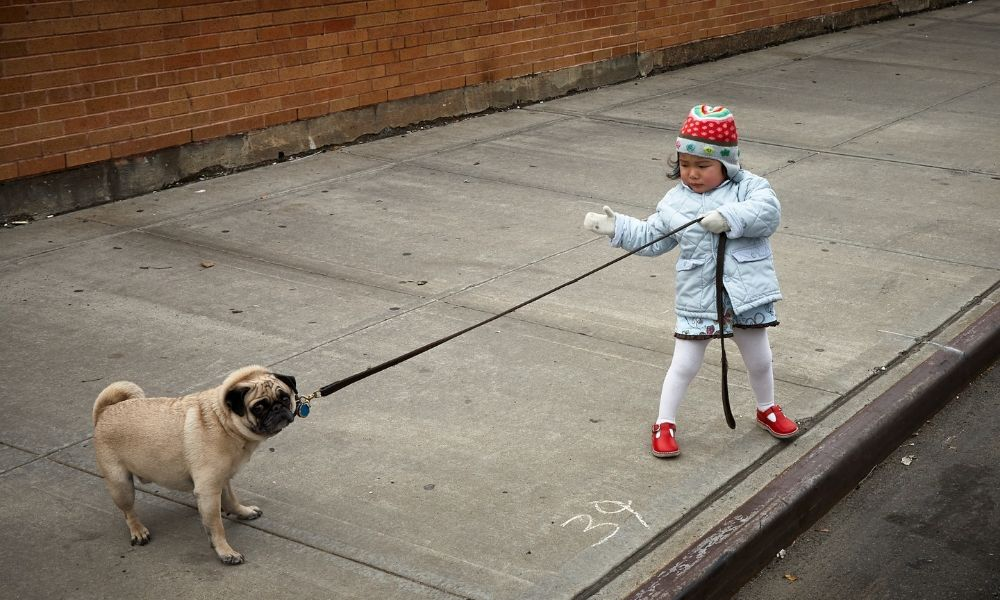 child holding a pulling dog on a leash