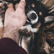 dog biting hand of man