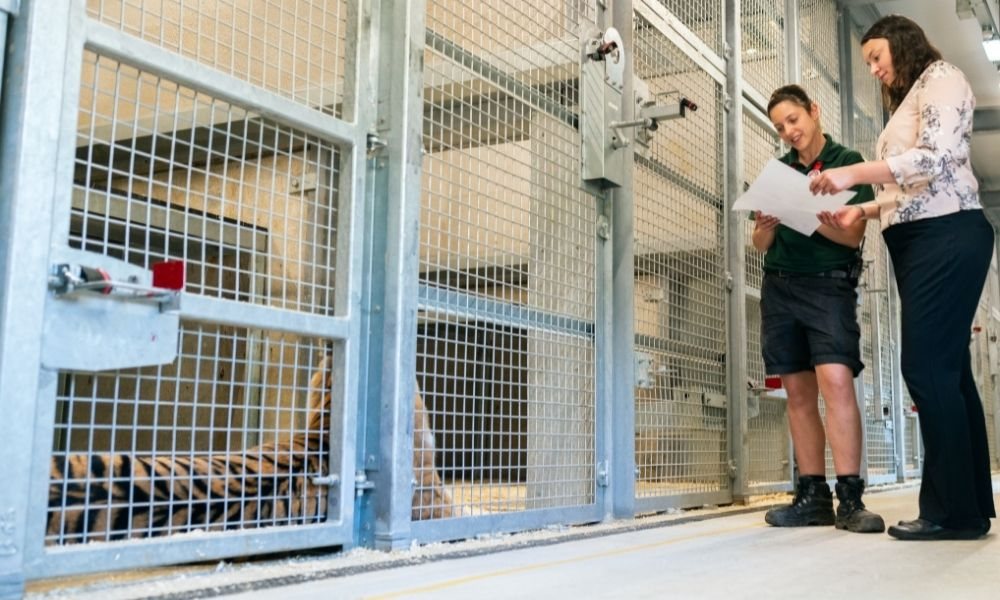 tiger in a cage with two people talking